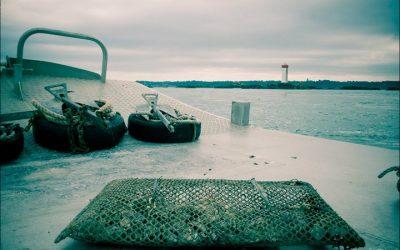 Huîtres élevées et affinées sur la baie de Paimpol… en chaland