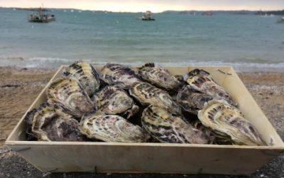 Acheter des huitres partout en France en direct du producteur