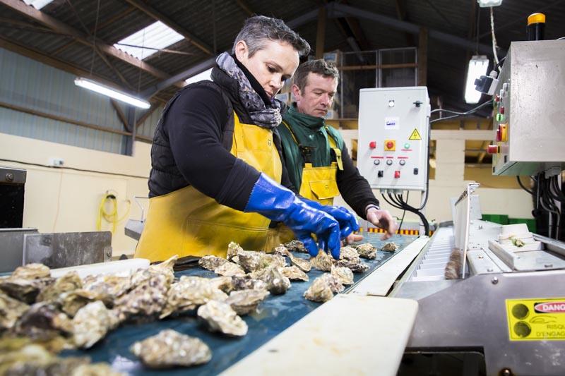 Tri des huîtres